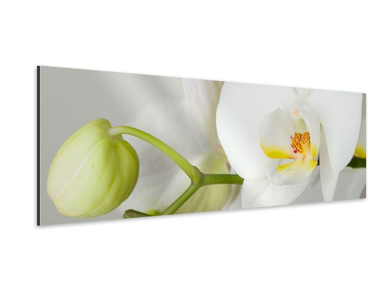 Aluminiumbild Panorama Riesenorchidee