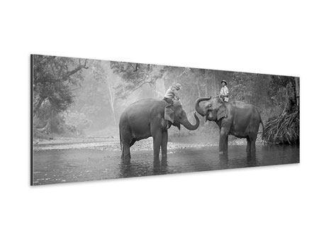 Aluminiumbild Panorama Zwei Elefanten