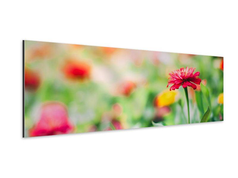 Aluminiumbild Panorama Im Blumengarten