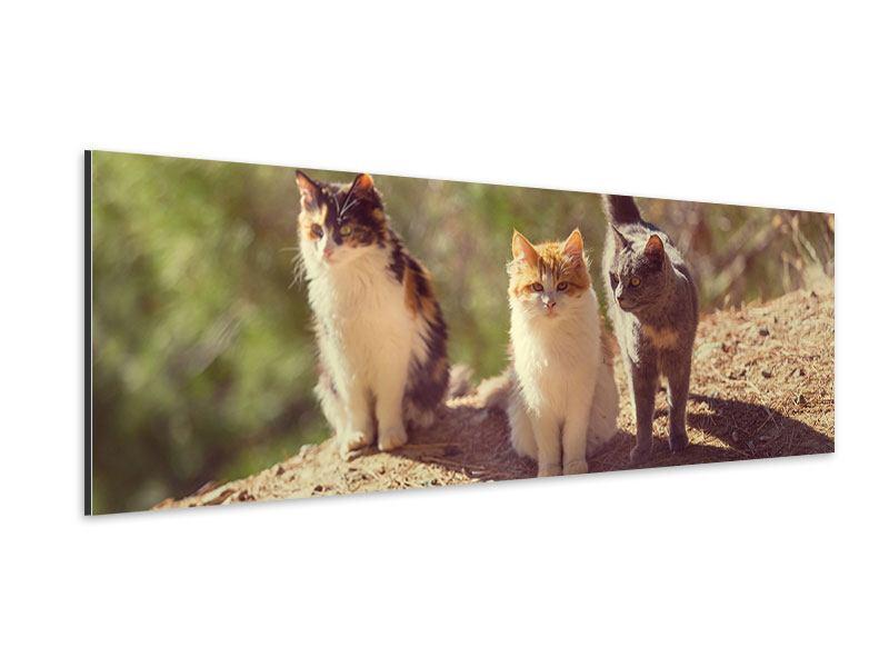 Aluminiumbild Panorama Katzen im Garten