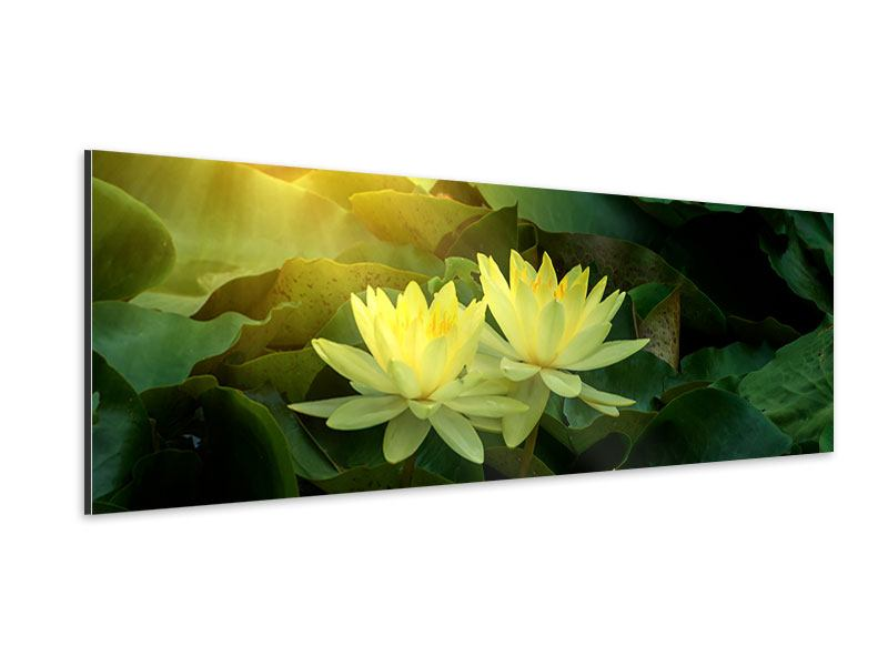 Aluminiumbild Panorama Wilde Lotus
