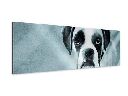 Aluminiumbild Panorama Boxer