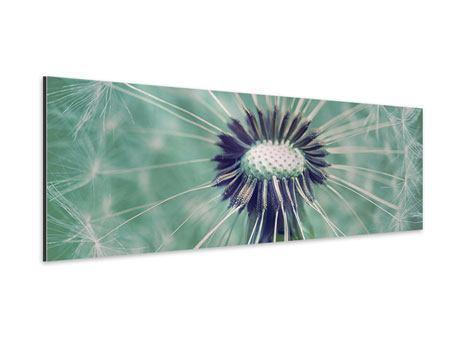 Aluminiumbild Panorama Close Up Pusteblume