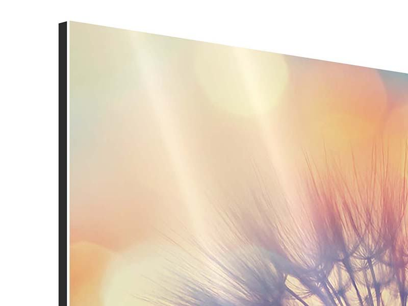 Aluminiumbild Panorama Die Pusteblume im Licht