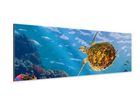 Aluminiumbild Panorama Die Wasserschildkröte