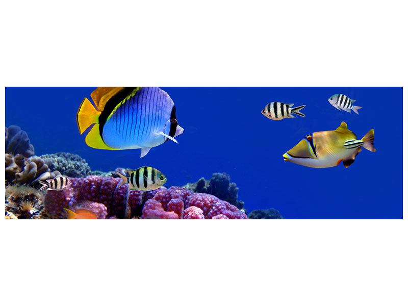 Aluminiumbild Panorama Welt der Fische