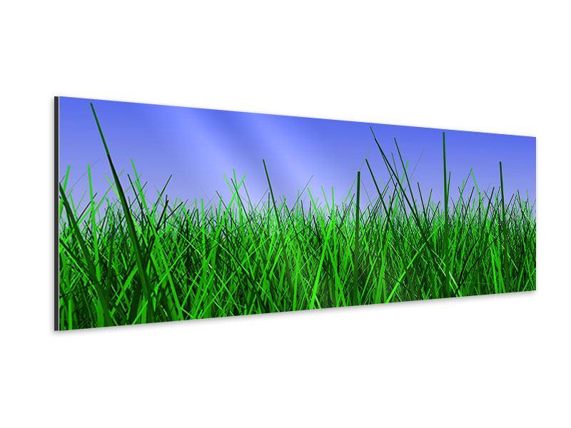 Aluminiumbild Panorama Im Gras