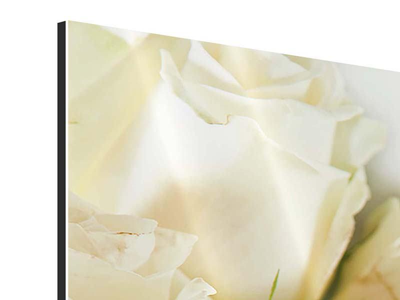 Aluminiumbild Panorama Weisse Rosen