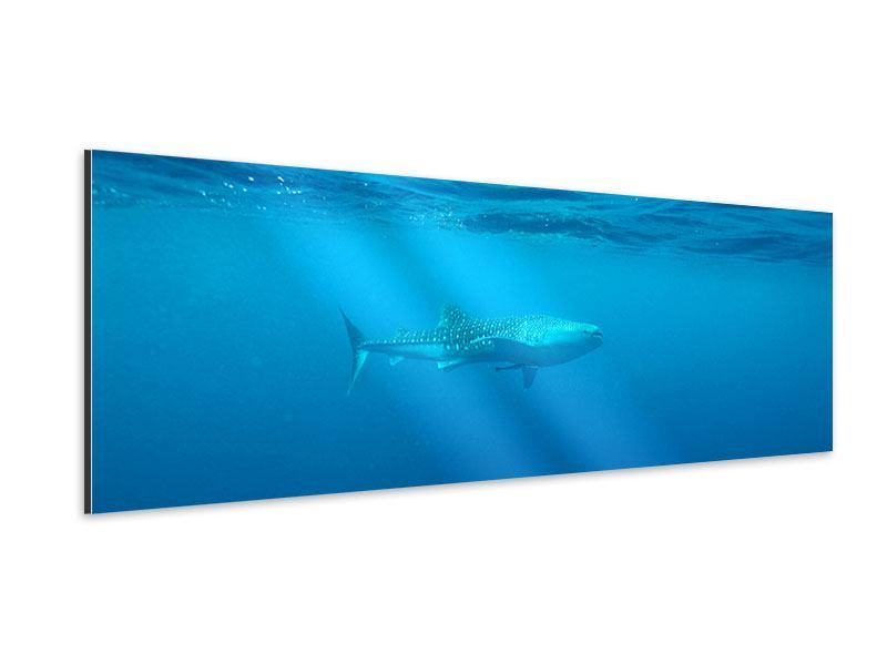 Aluminiumbild Panorama Der Walhai