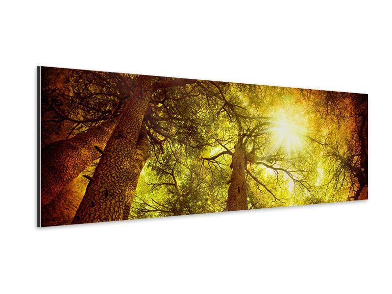 Aluminiumbild Panorama Cedar Baum