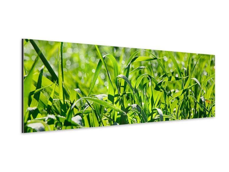 Aluminiumbild Panorama Sonniges Gras