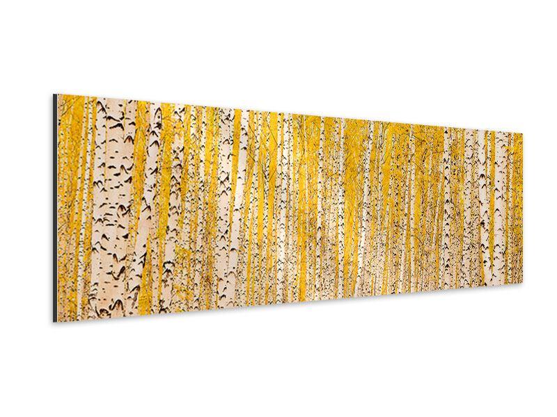 Aluminiumbild Panorama Der Birkenwald im Herbst