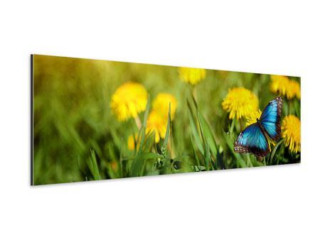 Aluminiumbild Panorama Der Löwenzahn und der Schmetterling