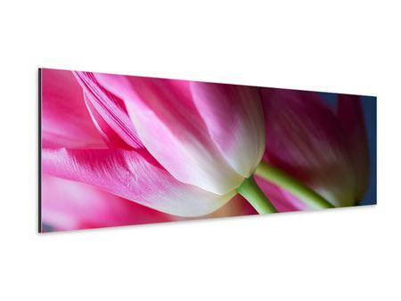 Aluminiumbild Panorama Makro Tulpen