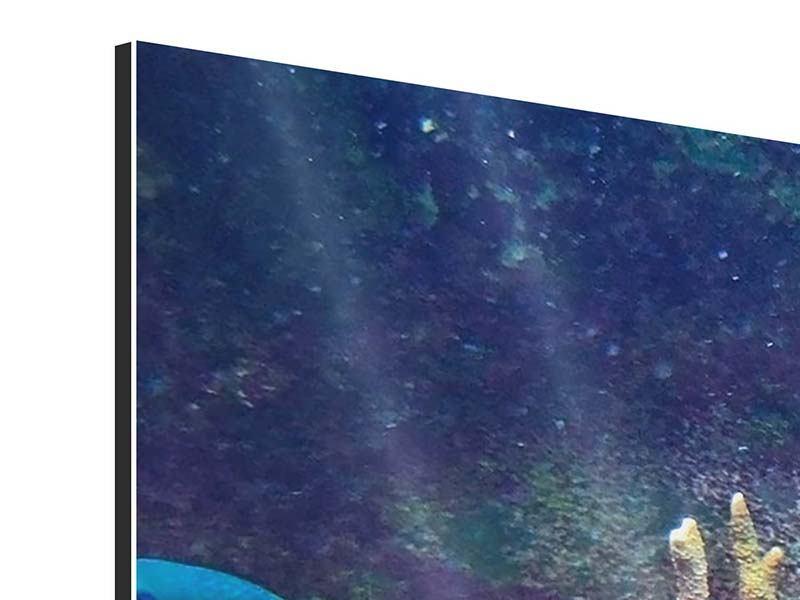 Aluminiumbild Panorama Fische