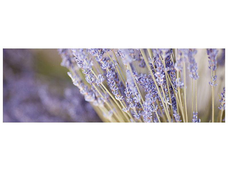 Aluminiumbild Panorama Lavendel XXL