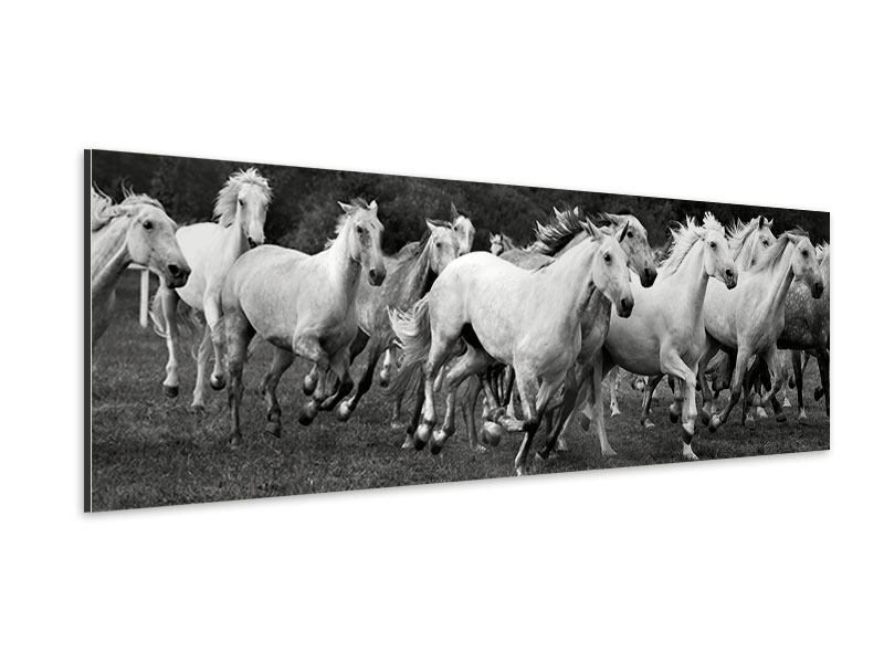 Aluminiumbild Panorama Die Mustang Herde