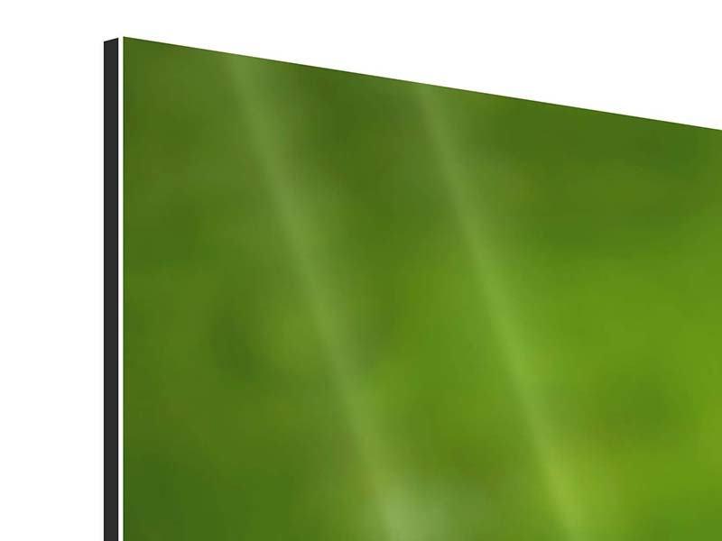 Aluminiumbild Panorama Entenküken