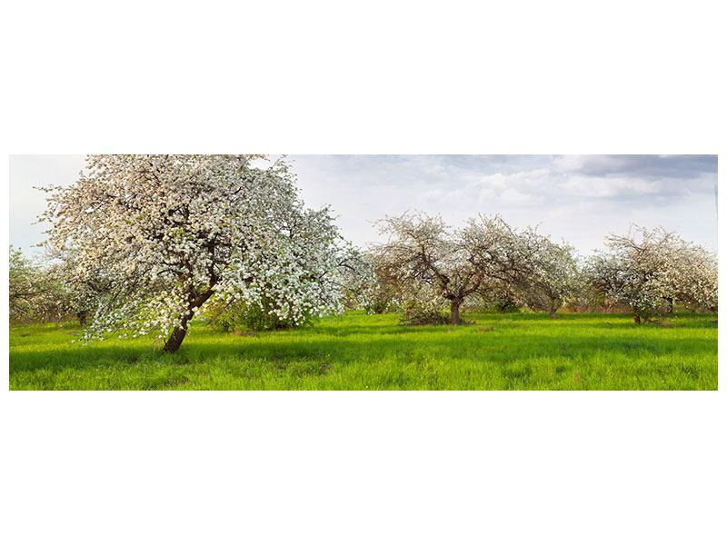 Aluminiumbild Panorama Apfelbaum-Garten