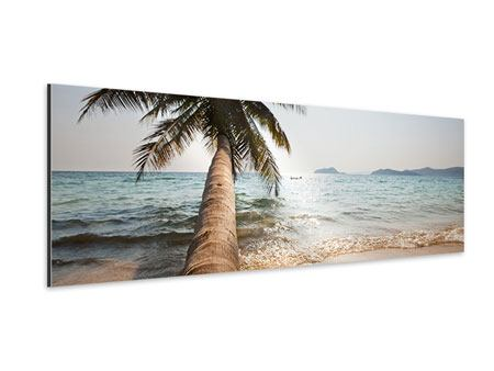 Aluminiumbild Panorama Palme