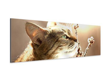 Aluminiumbild Panorama Die Katze