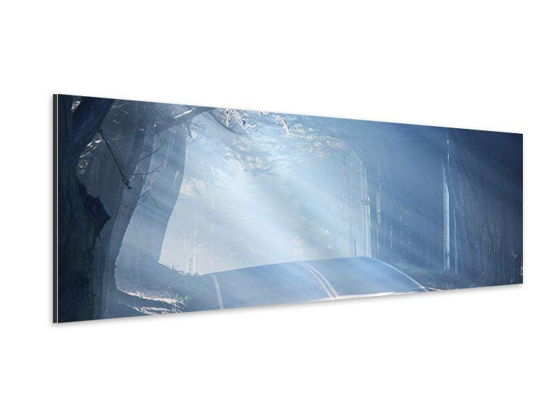 Aluminiumbild Panorama Lichtdurchflutete Baumallee