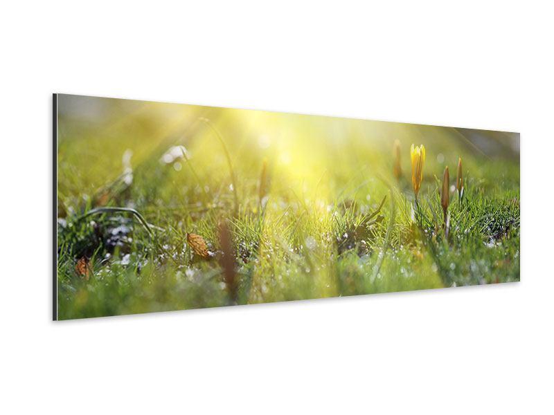 Aluminiumbild Panorama Blumige Wiese
