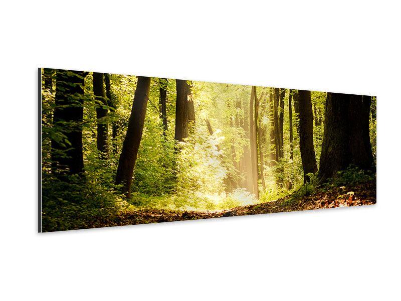 Aluminiumbild Panorama Sonnenaufgang im Wald