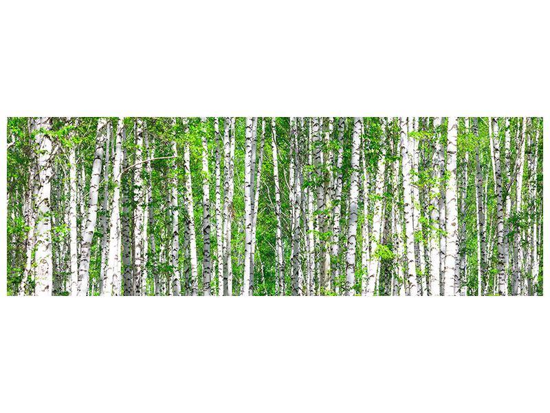 Aluminiumbild Panorama Der Birkenwald