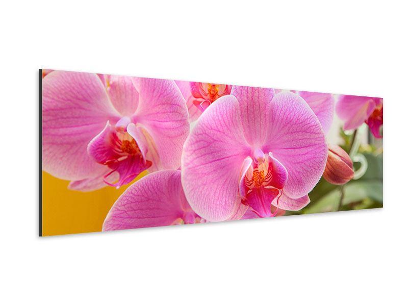 Aluminiumbild Panorama Königliche Orchideen