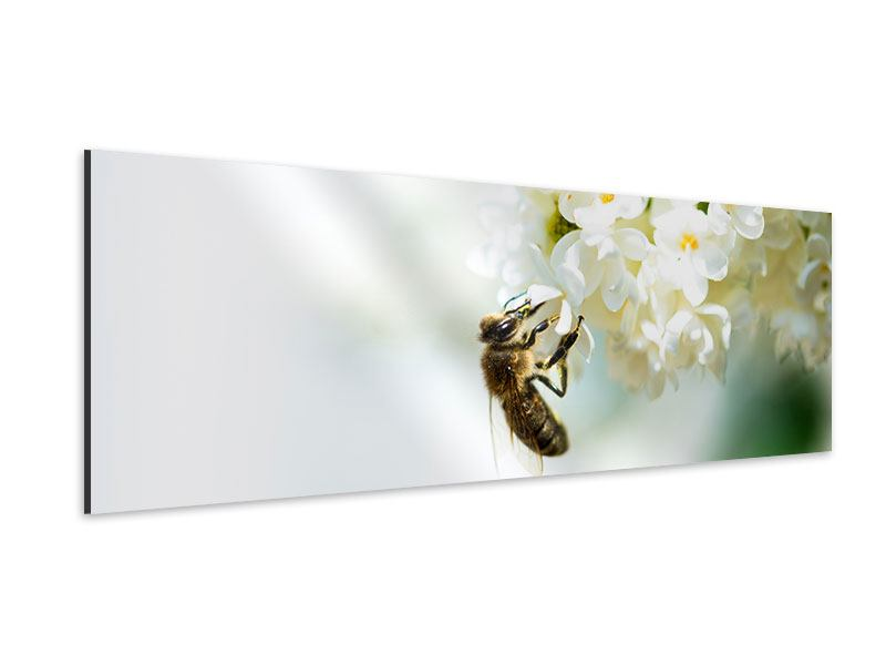 Aluminiumbild Panorama Die Hummel und die Blüte