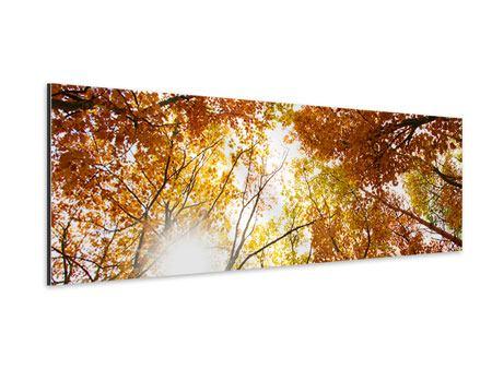 Aluminiumbild Panorama Herbstbäume