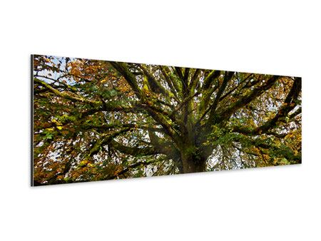 Aluminiumbild Panorama Mein Lieblingsbaum