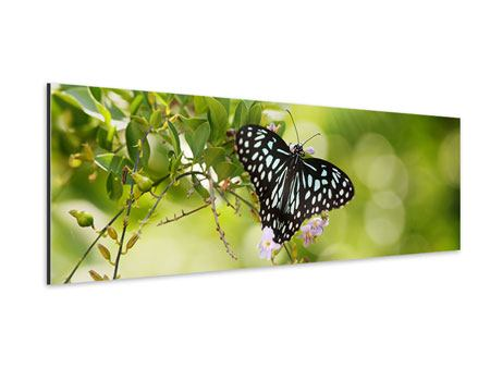 Aluminiumbild Panorama Papilio Schmetterling XXL