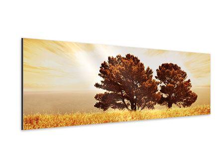 Aluminiumbild Panorama Bäume im Lichtspektakel