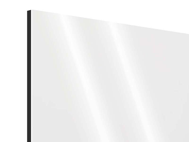 Aluminiumbild Panorama Katzenbaby