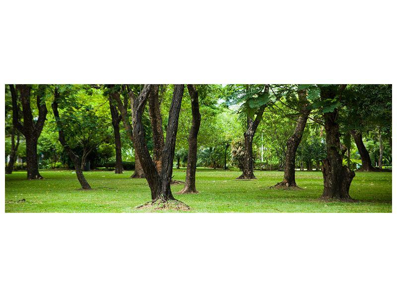 Aluminiumbild Panorama Kirschbaum-Garten