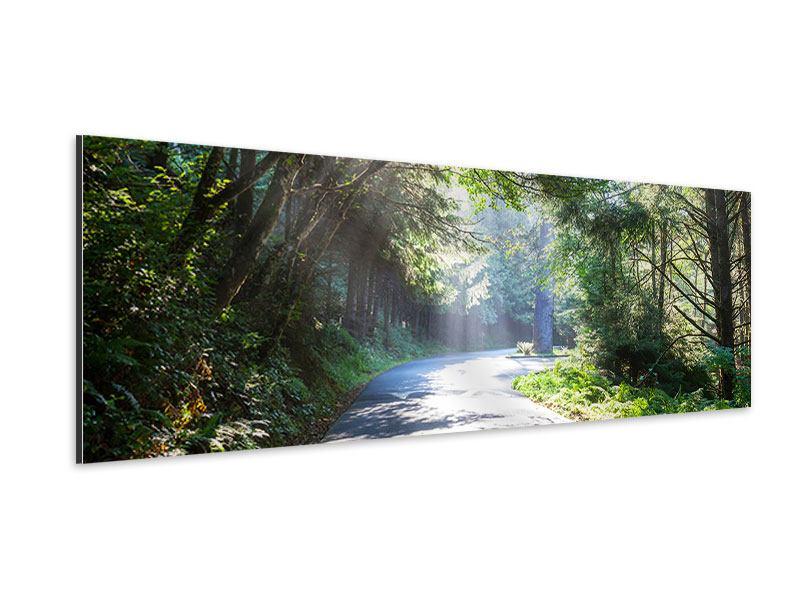 Aluminiumbild Panorama Sonniger Waldweg