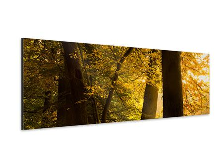 Aluminiumbild Panorama Herbstlaub
