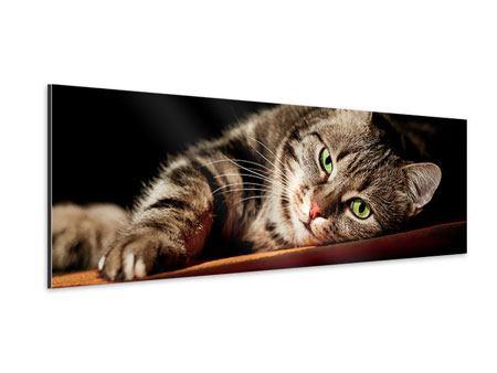Aluminiumbild Panorama Entspannte Katze