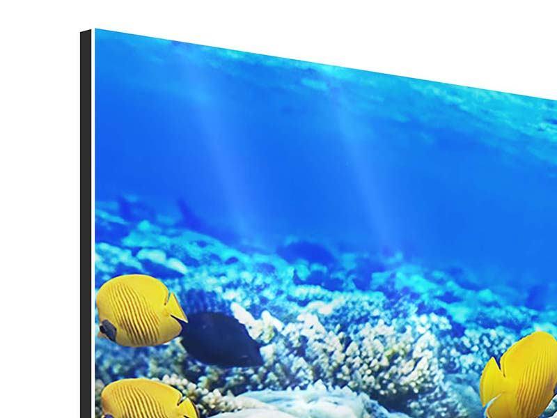 Aluminiumbild Panorama Fischaquarium