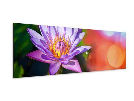 Aluminiumbild Panorama Colored Lotus