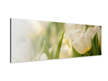 Aluminiumbild Panorama Tulpenperspektive