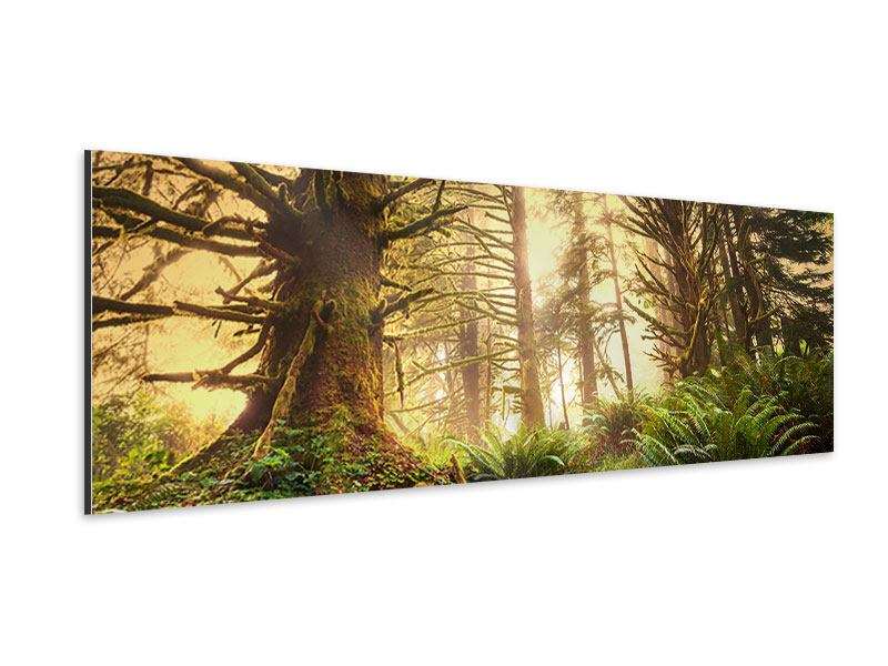 Aluminiumbild Panorama Sonnenuntergang im Dschungel