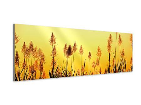 Aluminiumbild Panorama Die Blumen des Feldes