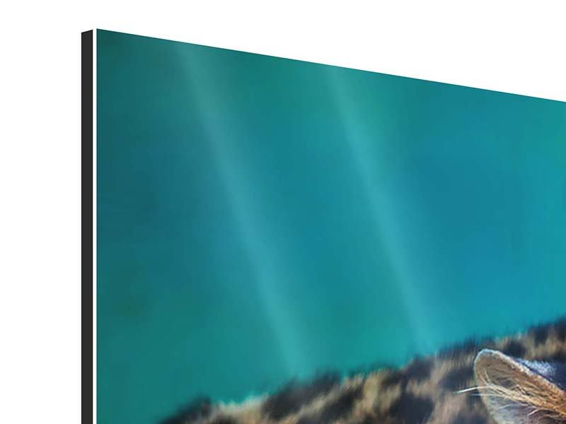 Aluminiumbild Panorama Achtung Leopard
