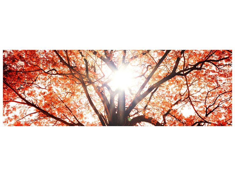 Aluminiumbild Panorama Herbstlicht
