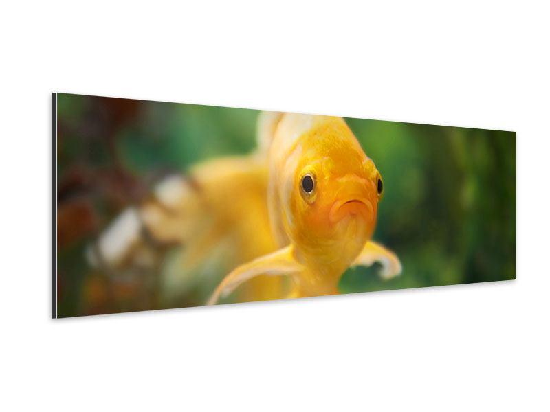 Aluminiumbild Panorama Der Fisch