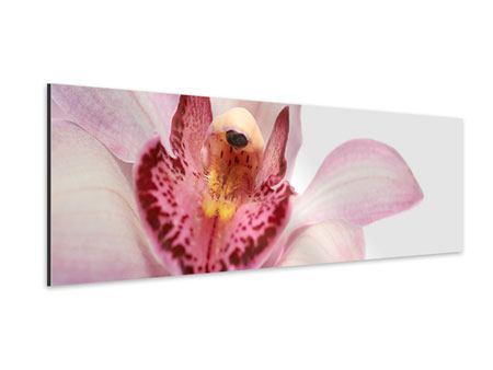 Aluminiumbild Panorama Orchideenblüte XXL