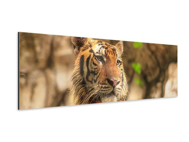 Aluminiumbild Panorama Tiger